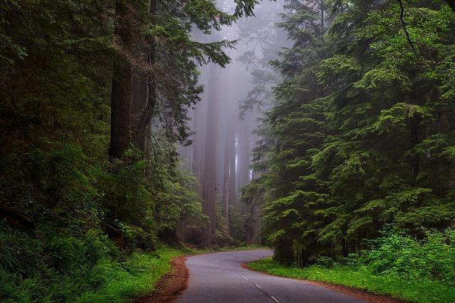 redwood národní park